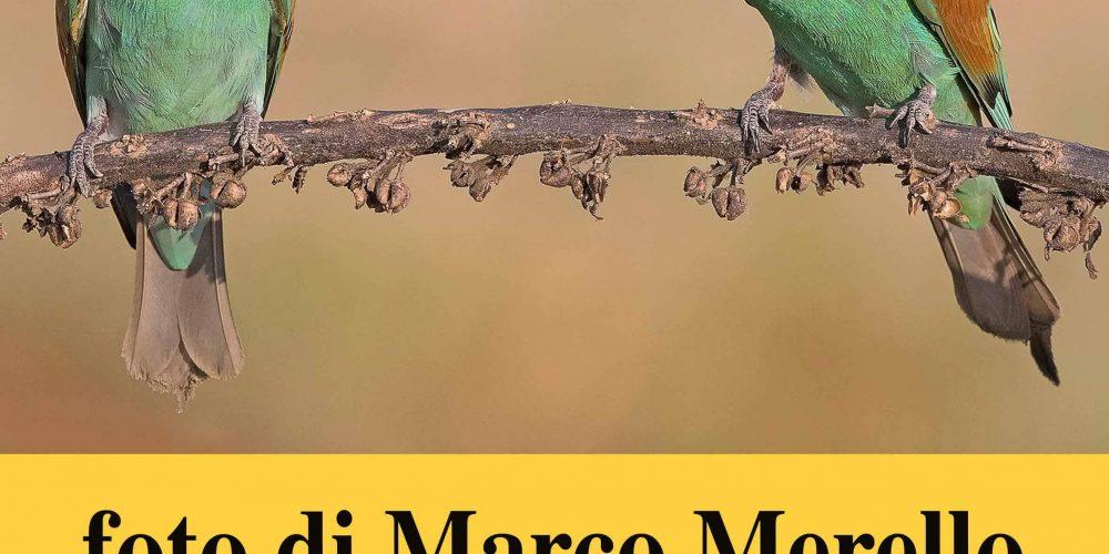 Un caffè… con l'avifauna – Le fotografie di Marco Merello al Sisters Caffè